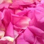 Scooping rose petals
