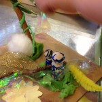 Nature dioramas
