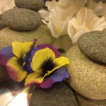 Rocks, flowers, and reflections