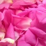 Sensory activity with rose petals